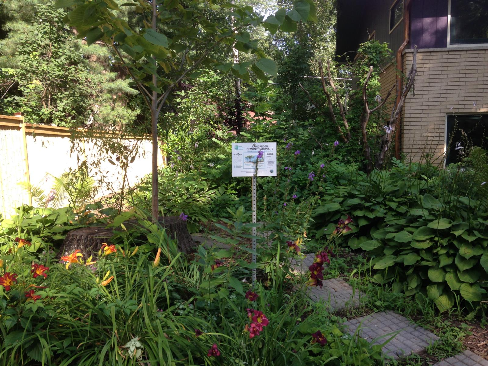 There are a wide variety of plants that will survive and thrive in a shaded rain garden. (Installed in 2009)