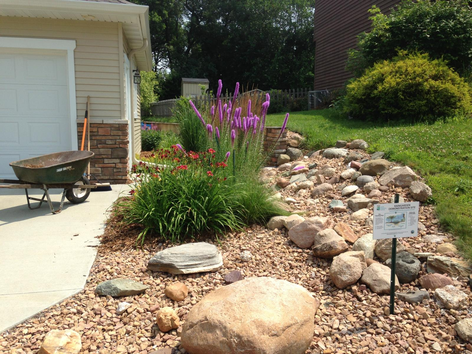 Water running off the neighboring property, as well as water coming off the roof, discharge into this rain garden.