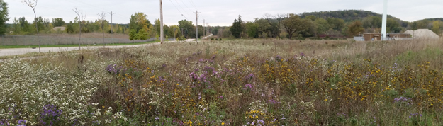 Open spaces planted with native vegetation